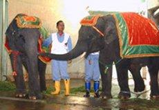elephant28F.jpg